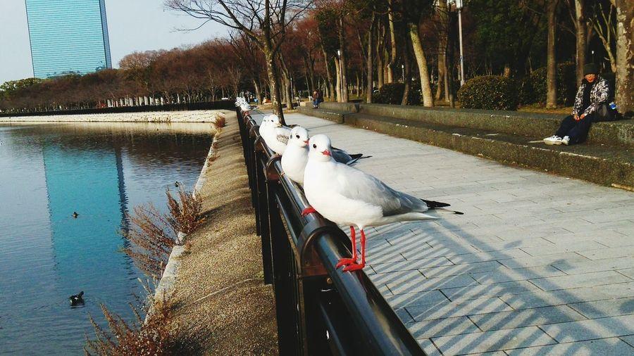 Osaka park~funny sea gull~