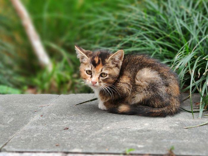 Cat Animall