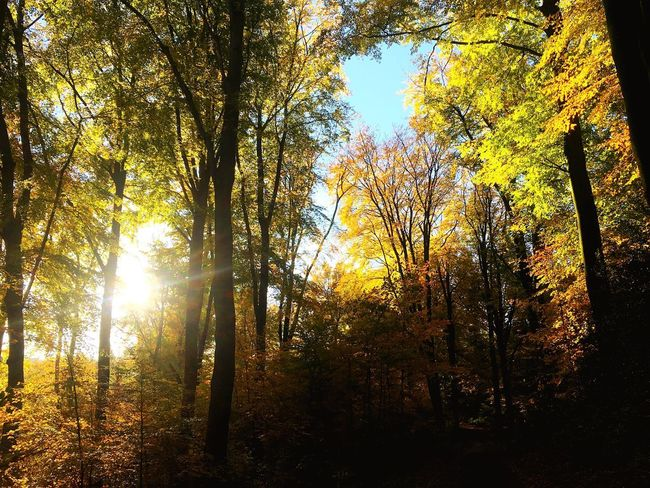Trees Sun Fok Autumn Beauty In Nature Forest Leaf WoodLand