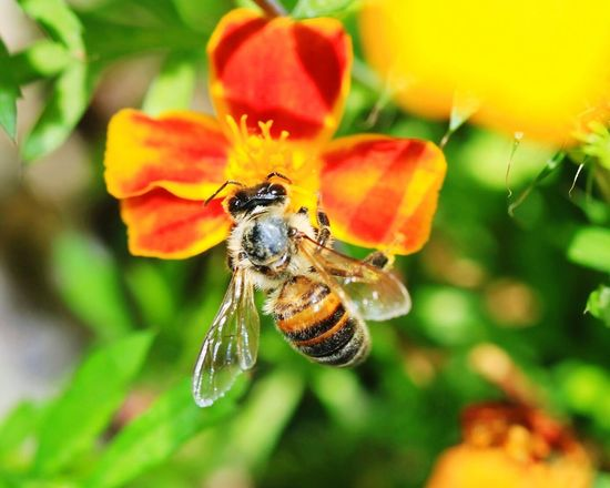 Böcek Beetle Bee Flower Tabiat Doğa