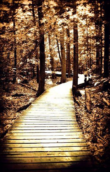 Marron Trail