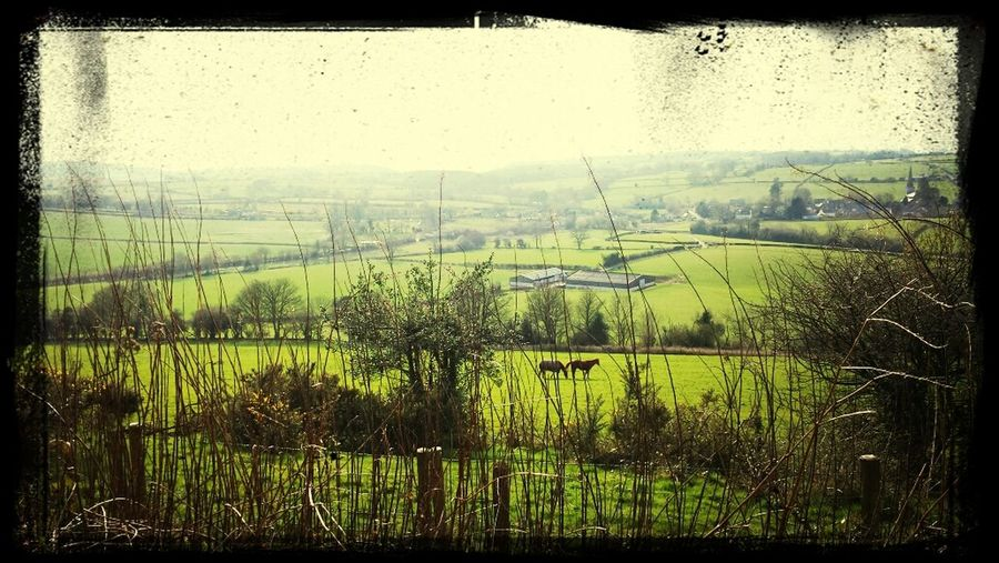 Welsh country side, out and aboutt in the brief sunshine Walking Around Escaping