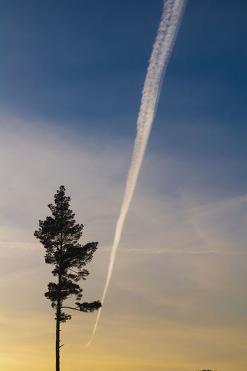 Beauty In Nature Contrail Low Angle View Nature No People Outdoors Sky Tree Vapor Trail