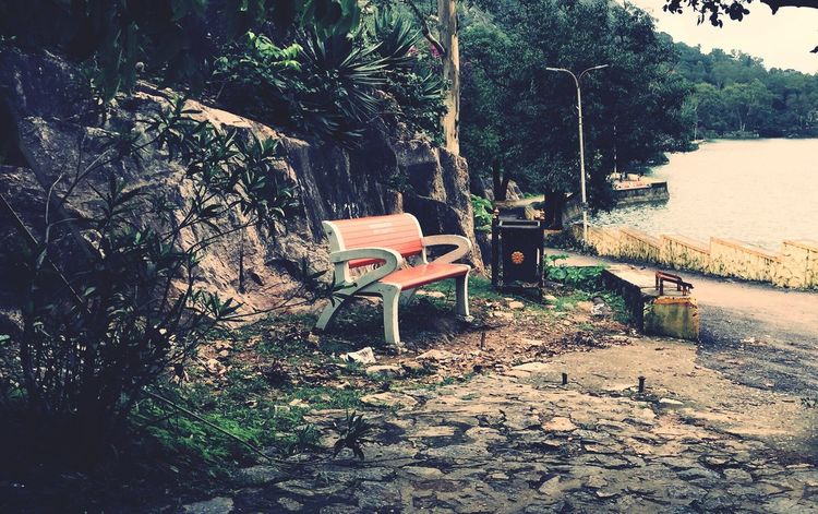 Tree Chair Plant Nature Outdoors Day No People Leaf Growth Beauty In Nature Couple Duet Both Love ♥ With My God Seater Chair Art Chair Wood Chair Collection Chair Lift Water Surface