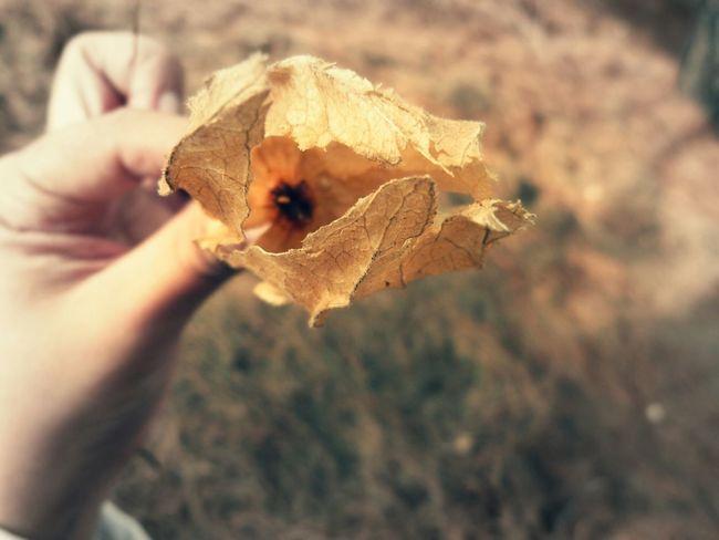 Otoño. Photography Photooftheday Yellow Flower Instaday