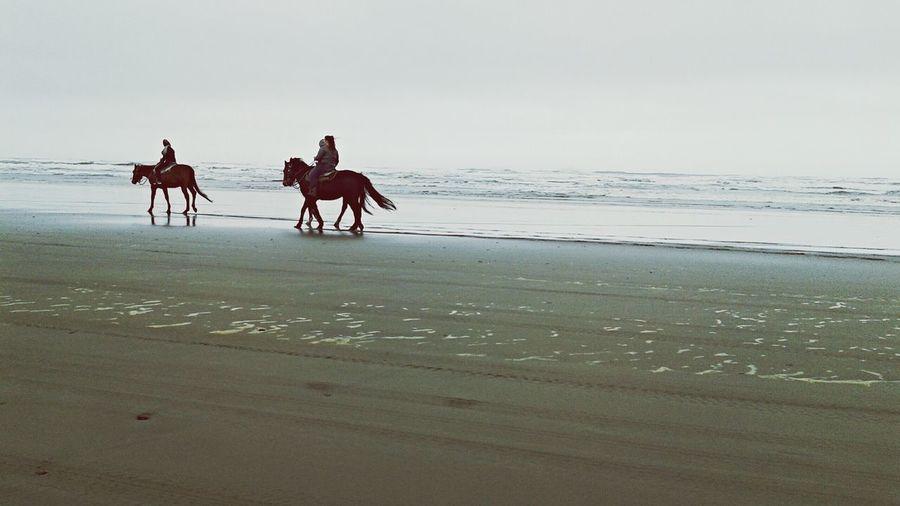 Beachphotography Horseriding Horses Silhouettes Pacific Ocean Washingtoncoast