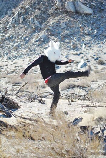 Thefrenchlabphotography Rabbit Desert Palmsprings Angry Losangeles Photographers