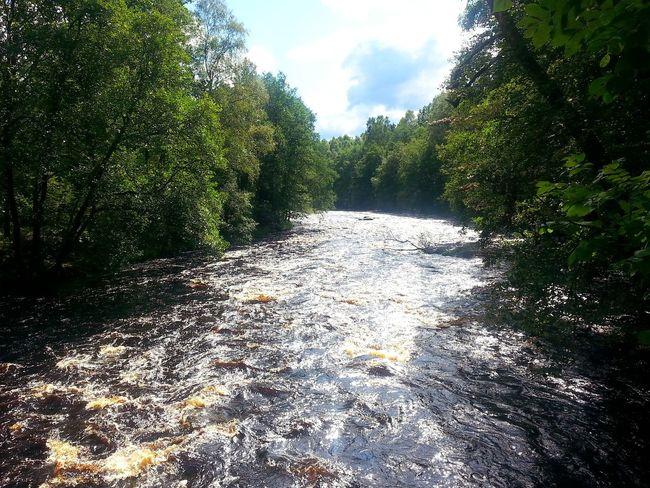 Nature Lagan Vatten Fors