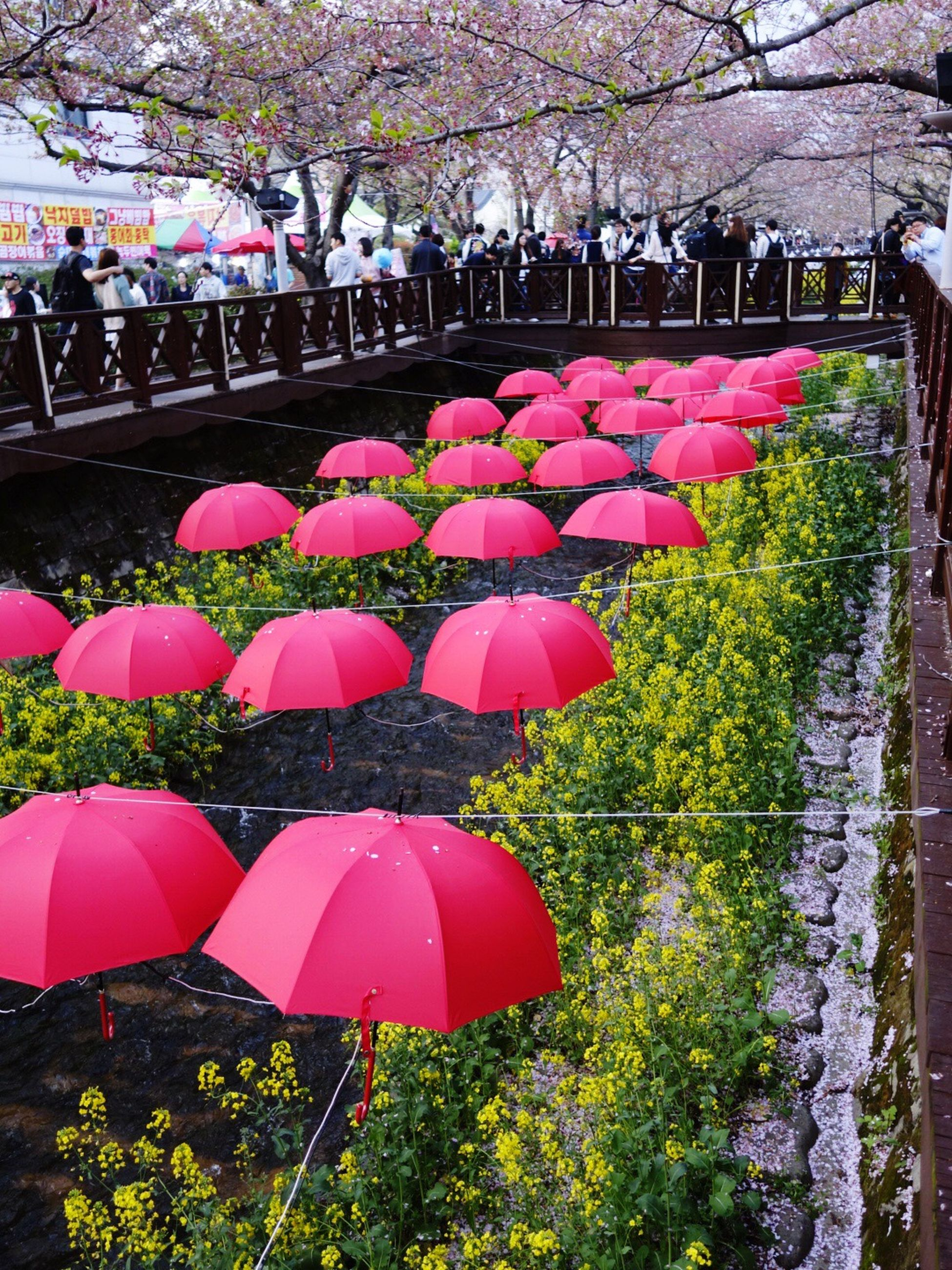 flower, tree, hanging, pink color, built structure, growth, architecture, nature, blossom, day, umbrella, multi colored, fragility, building exterior, outdoors, beauty in nature, decoration, red, park - man made space, springtime