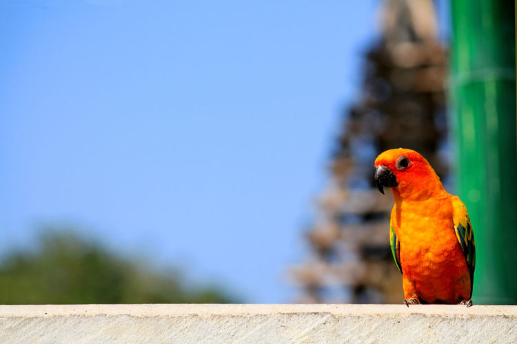 Close-up of parrot perching on wood against blue sky