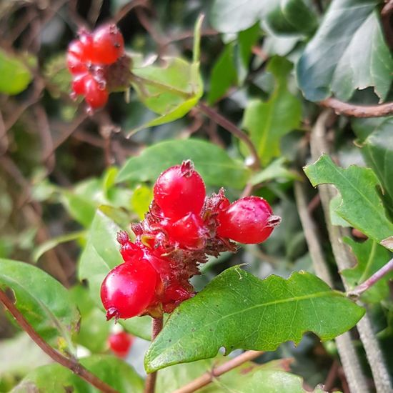 Walking Around Green Leaves Tree Fruit Leaf Red Close-up Plant Berry Fruit