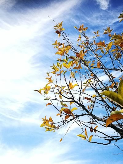 Foglie Sky Flower Sky Nature Low Angle View Beauty In Nature Blossom Cloud - Sky Fragility Tree Day Springtime No People