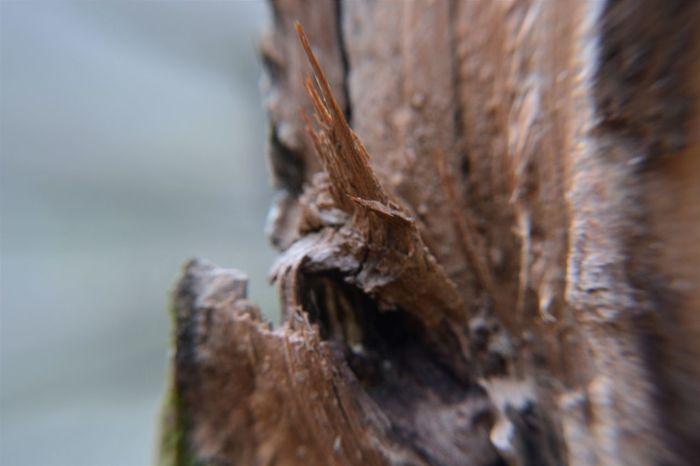 Brown Close-up Macro Nature No People Tree Tree Trunk Wood - Material