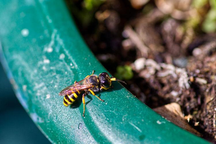 Close-up of wasp