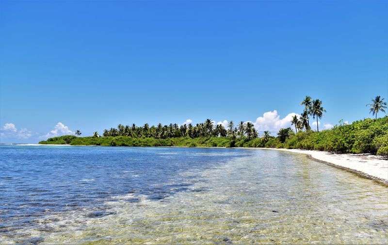 Addu Atoll Beach Beauty In Nature Blue Coconut Palm Tree Environment Island Luxury Malediven  Nature No People Outdoors Palm Beach Palm Tree Plant Scenics - Nature Sea Sky Tranquil Scene Tranquility Travel Destinations Tree Tropical Climate Tropical Tree Water