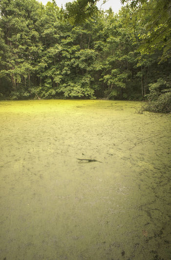 Duckweed in a pond Beauty In Nature Green Color Growth Lake Landscape Nature No People Pond Tranquil Scene Tranquility Tree Water