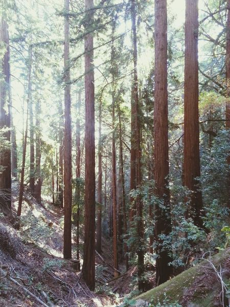Trees Hiking❤ Getting In Touch Escaping