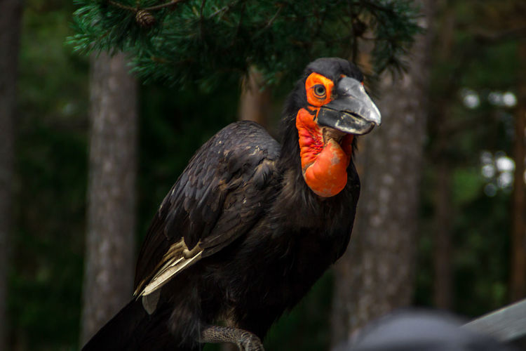 Close-up of hornbill against trees