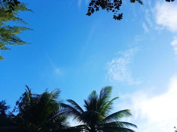Tree Blue Palm Tree Branch Nature Clear Sky No People Growth Beauty In Nature Day Outdoors Leaf Sky Samsung Galaxy S7 Puerto Rico Nature Tranquility