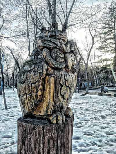 HDR Voronezh зоопарк Owl Sculpture Wood - Material Wood