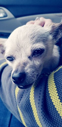 EyeEm Selects Dog Pets One Animal Domestic Animals Mammal Family Pet Animal Themes Day Close-up Indoors  Latepost Veterinary Clinic Recovering Sick Pets Sad Dog Eyes Love My Pet Getting Older
