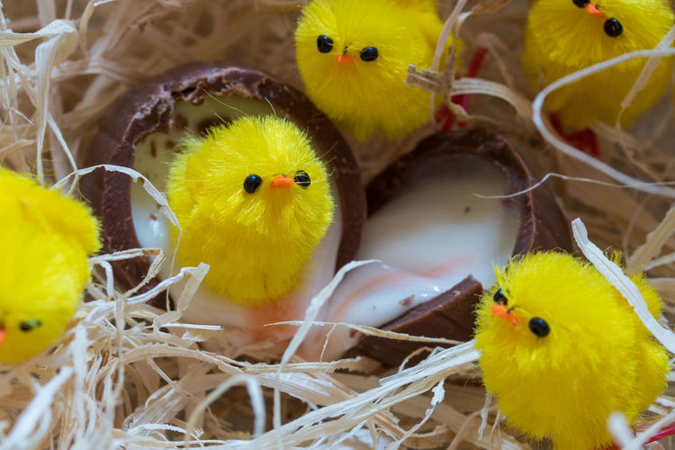 Chocolate Easter Easter Egg Easter Ready Easter Sunday Easter Eggs Animal Themes Baby Chicken Bird Bird Nest Chicken - Bird Close-up Day Domestic Animals Easter Easter Chicks High Angle View Indoors  Nature Nest No People Yellow Young Animal Young Bird