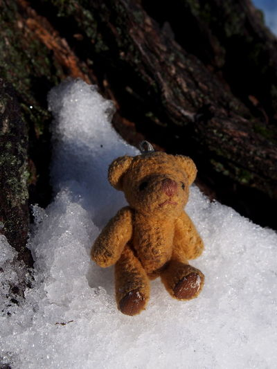 Snow Winter Cold Temperature No People Nature Close-up Tree Day Focus On Foreground Stuffed Toy Plant Toy Land Tree Trunk Covering Trunk Outdoors Beauty In Nature Teddy Bear
