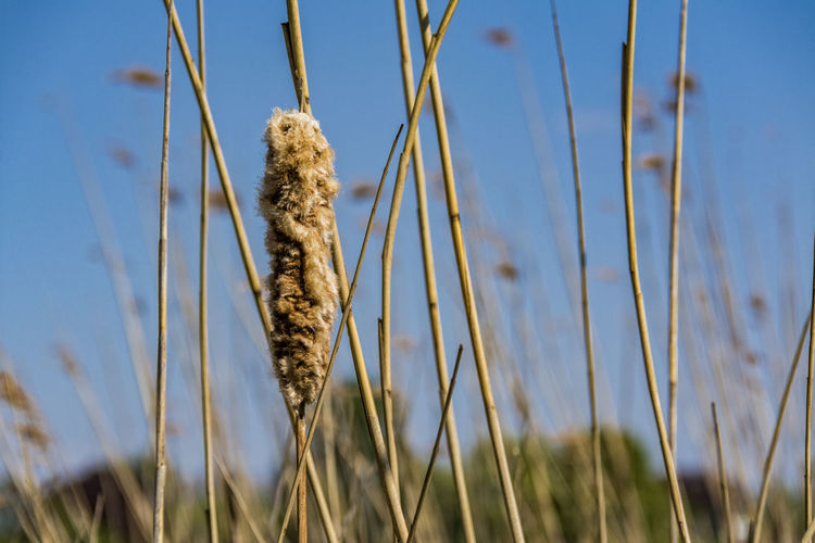 Dried plant on field against sky