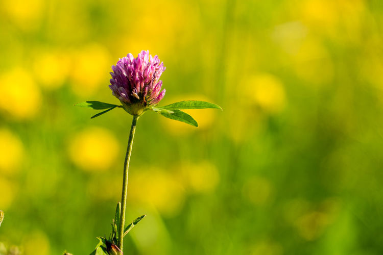 Nature Plants Summer Italy Tuscany Flowering Plant Flower Beauty In Nature Fragility Vulnerability  Plant Freshness Growth Close-up Focus On Foreground Petal Green Color Pink Color Inflorescence Flower Head No People Plant Stem Day Outdoors Purple Sepal