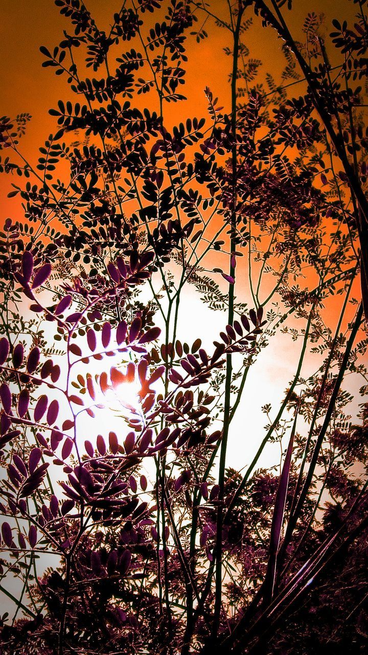 low angle view, tree, no people, beauty in nature, nature, growth, sky, outdoors, sun, sunset, branch, scenics, day, close-up