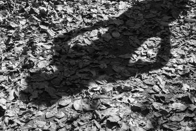 shadow of women