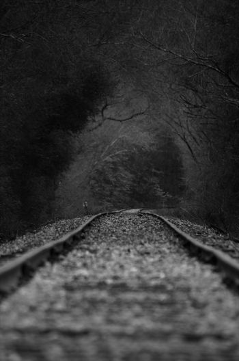 Track The Way Forward Direction Railroad Track Rail Transportation Transportation No People Tree Nature Diminishing Perspective Plant vanishing point Selective Focus Day Outdoors Motion Road Land Forest Mode Of Transportation Surface Level Long
