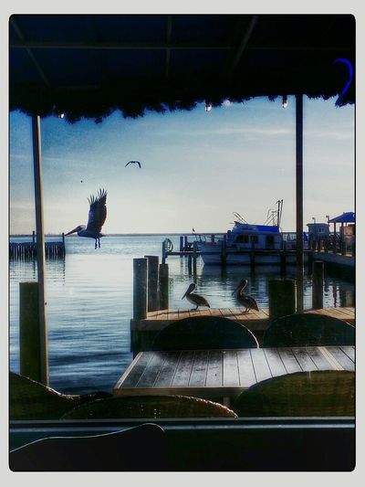Ocean View Pelicans Onebyone Dinning Texas Travel