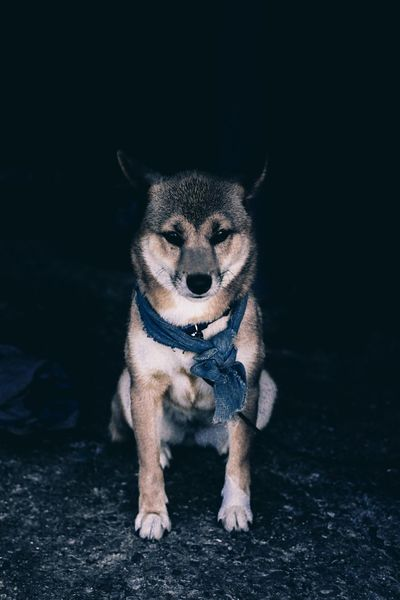 // when I see them I see loyalty // Dog Dogs Portrait EyeEm Eye4photography  Check This Out Animals Pets EyeEm Best Shots Japan