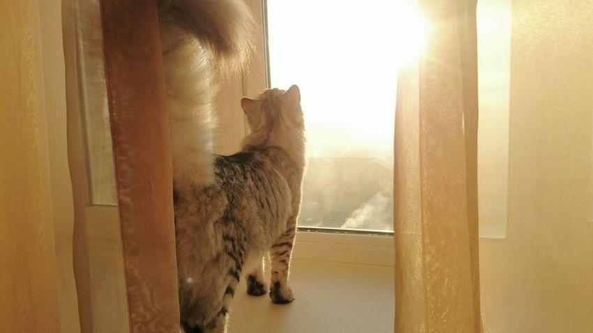 Hello World This Morning Taking Photos My Cat Luna Sunrise Taking Photos привет мир утром восход солнце☀ Моя кошка Cat