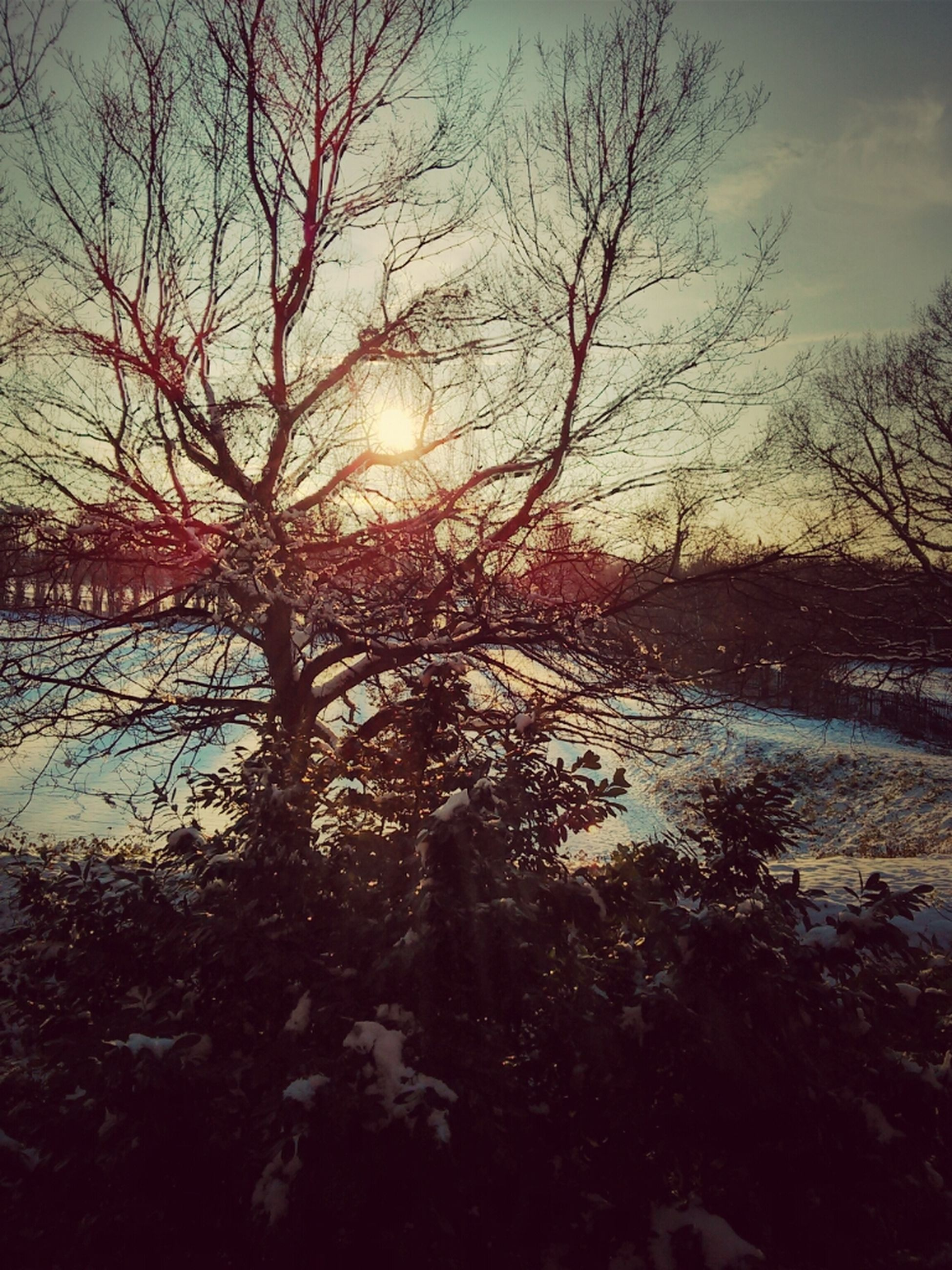 tree, bare tree, branch, tranquility, tranquil scene, beauty in nature, nature, scenics, sunset, sky, sun, silhouette, sunlight, growth, tree trunk, non-urban scene, idyllic, landscape, outdoors, no people