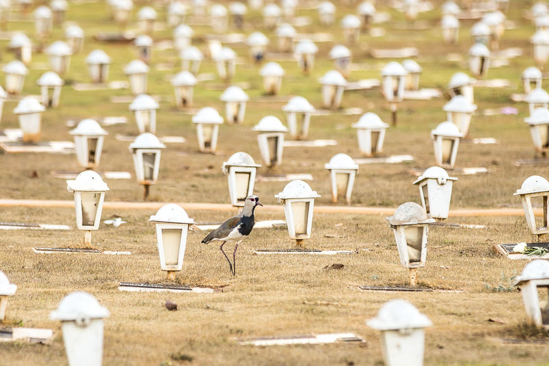 Bird perching on field at cemetery