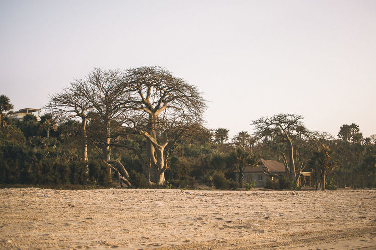 Africa EyeEm Best Shots EyeEmNewHere EyeEm Selects Tree Plant Sky Nature Land Environment Landscape Scenics - Nature Clear Sky No People Field Day Tranquility Copy Space Beauty In Nature Outdoors Non-urban Scene Tranquil Scene Growth Water