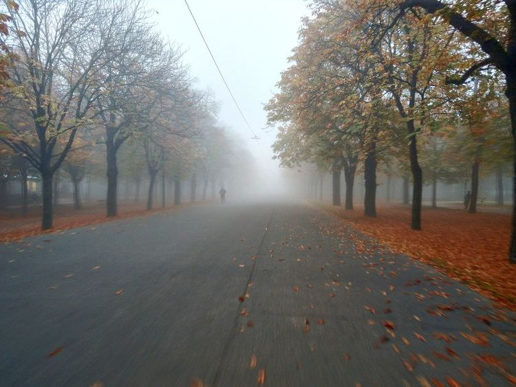 Vienna, Austria Prater Hauptallee entering the Fog on my bicyle Autumn Day Sunrise Foggy Morning Bicycle