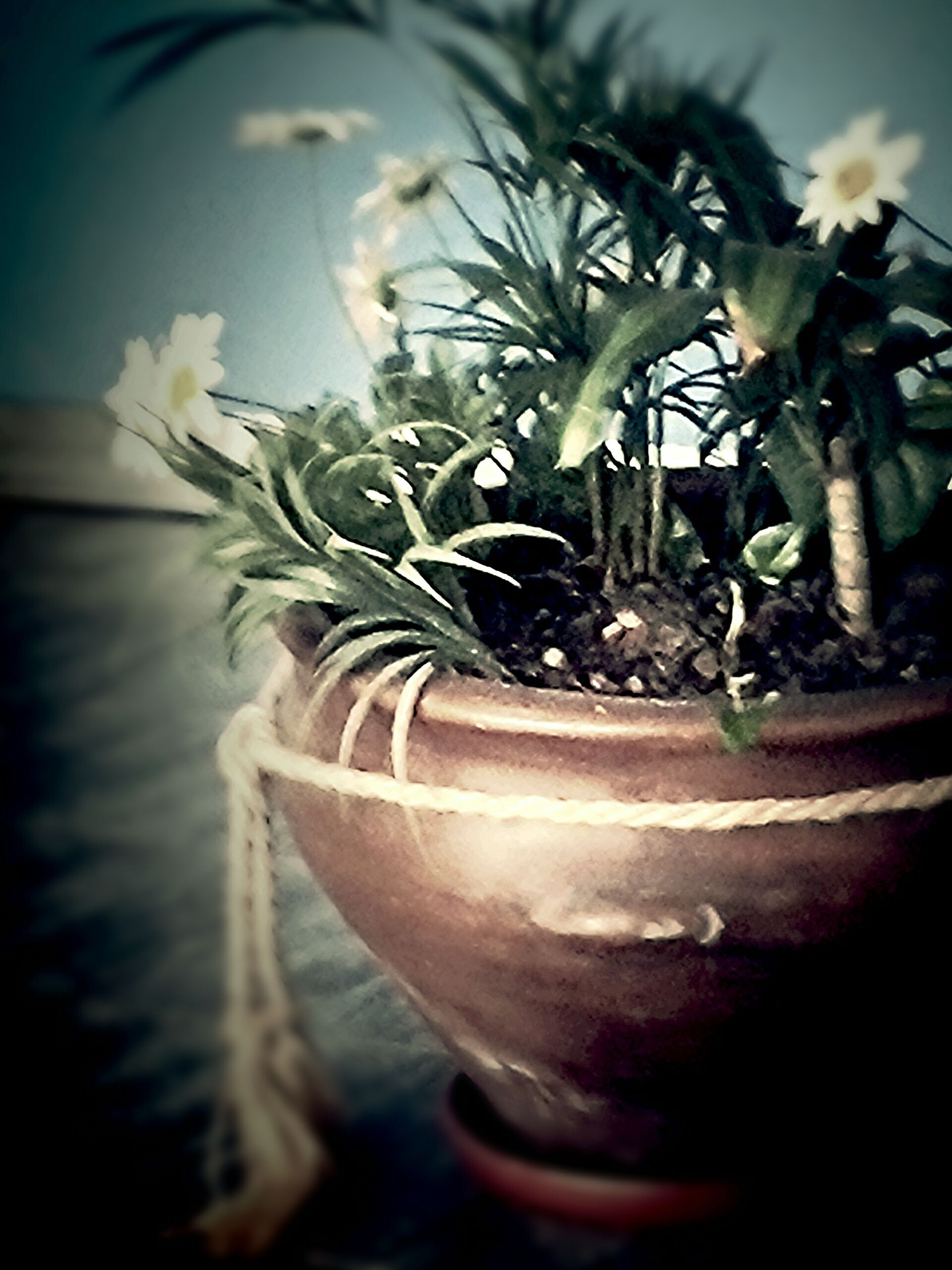 indoors, close-up, plant, potted plant, growth, vase, glass - material, flower, freshness, focus on foreground, fragility, leaf, home interior, selective focus, transparent, table, nature, no people, still life, window