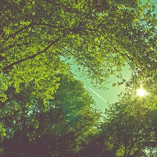 Respect Nature and Enjoy your Summer ! Techno Edm Rave Edmlife Festival Dj Edmgirls EDC Raver Festival Fusion Tomorrowland Sun Sky Love Openair Stereosonic  Exit Ultra Sziget Przy coachellatreetreessunshinleafpictureoftheday