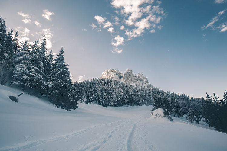 Beauty In Nature Cloud - Sky Cold Temperature Coniferous Tree Day Environment Land Landscape Mountain Nature No People Non-urban Scene Pine Tree Plant Scenics - Nature Sky Snow Snowcapped Mountain Snowing Tranquil Scene Tranquility Tree White Color Winter