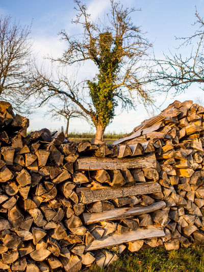 Firewood for the heating periode Tree Stack Plant Sky Large Group Of Objects Nature Log Wood - Material Timber Firewood Abundance Wood Lumber Industry Deforestation No People Forest Land Day Field Heap Woodpile Outdoors Change