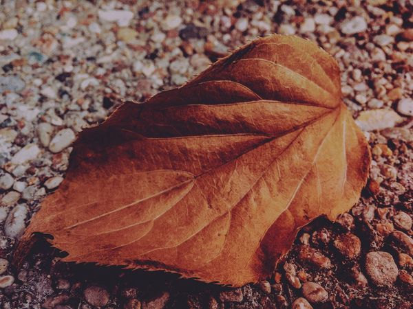 Autumn Leaves Leaf Autumn Autumn Colors Nature EyeEm Nature Lover Nature_collection Colors Of Autumn Autumn Collection EyeEm Best Shots