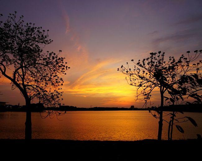 Bangkok Sky Silhouette Sunset Twilight Sky Trees