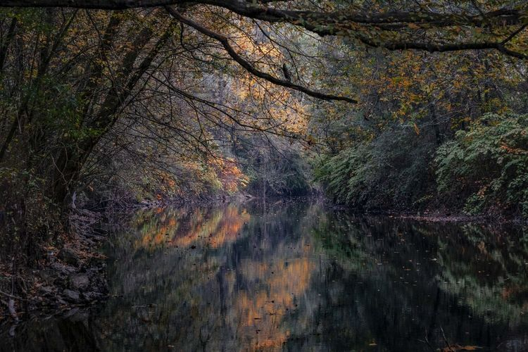 Tree Plant Forest Land Beauty In Nature Autumn Tranquility Trunk Tree Trunk Scenics - Nature No People Water Nature Tranquil Scene Non-urban Scene Day Change WoodLand Growth Outdoors Autumn Collection Flowing Water #colors #reflections
