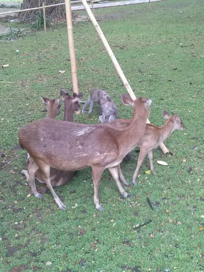 Deer and Monkey have a meeting Animal Animal Family Animal Themes Animal Wildlife Animals In The Wild Day Deer Field Grass Green Color Group Of Animals Land Mammal Nature No People Outdoors Plant Two Animals Vertebrate Young Animal