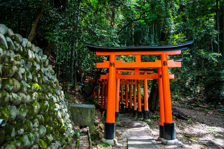 Fushimi Inari-taisha Shrine in Kyoto Japan Fushimi Inari-taisha Shrine Beauty In Nature Day Green Color Growth Kyoto Nature No People Outdoors Place Of Worship Religion Spirituality Travel Destinations Tree