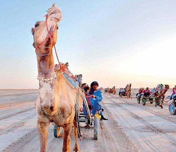 Desert Festival India Gujarat