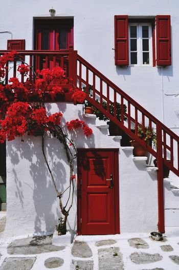 C L A SS I C Mykonos Mykonos,Greece Mykonostown House Houses And Windows Houseplant Home Is Where The Art Is Red Outdoors Architecture Building Exterior Built Structure Flower Doorporn EyeEm Best Edits Flowerporn EyeEm Best Shots EyeEmNewHere EyeEm Gallery Eye4photography  Beauty Freshness Flower_Collection Colour Of Life Color Explosion